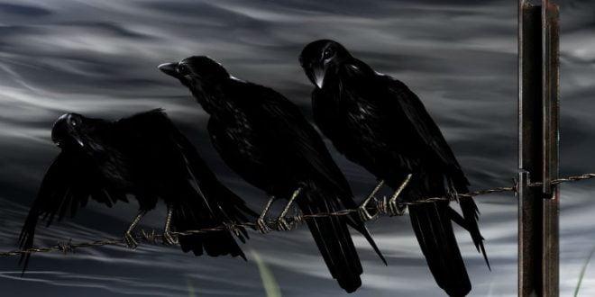 Патернны три белых солдата и три черные вороны