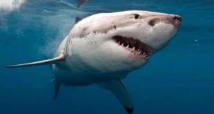 Binary Shark
