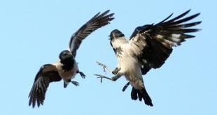 паттерн «Две взлетевшие вороны»